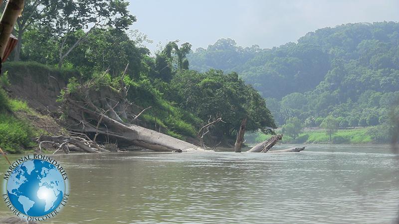A fallen tree on the Usumacinta River