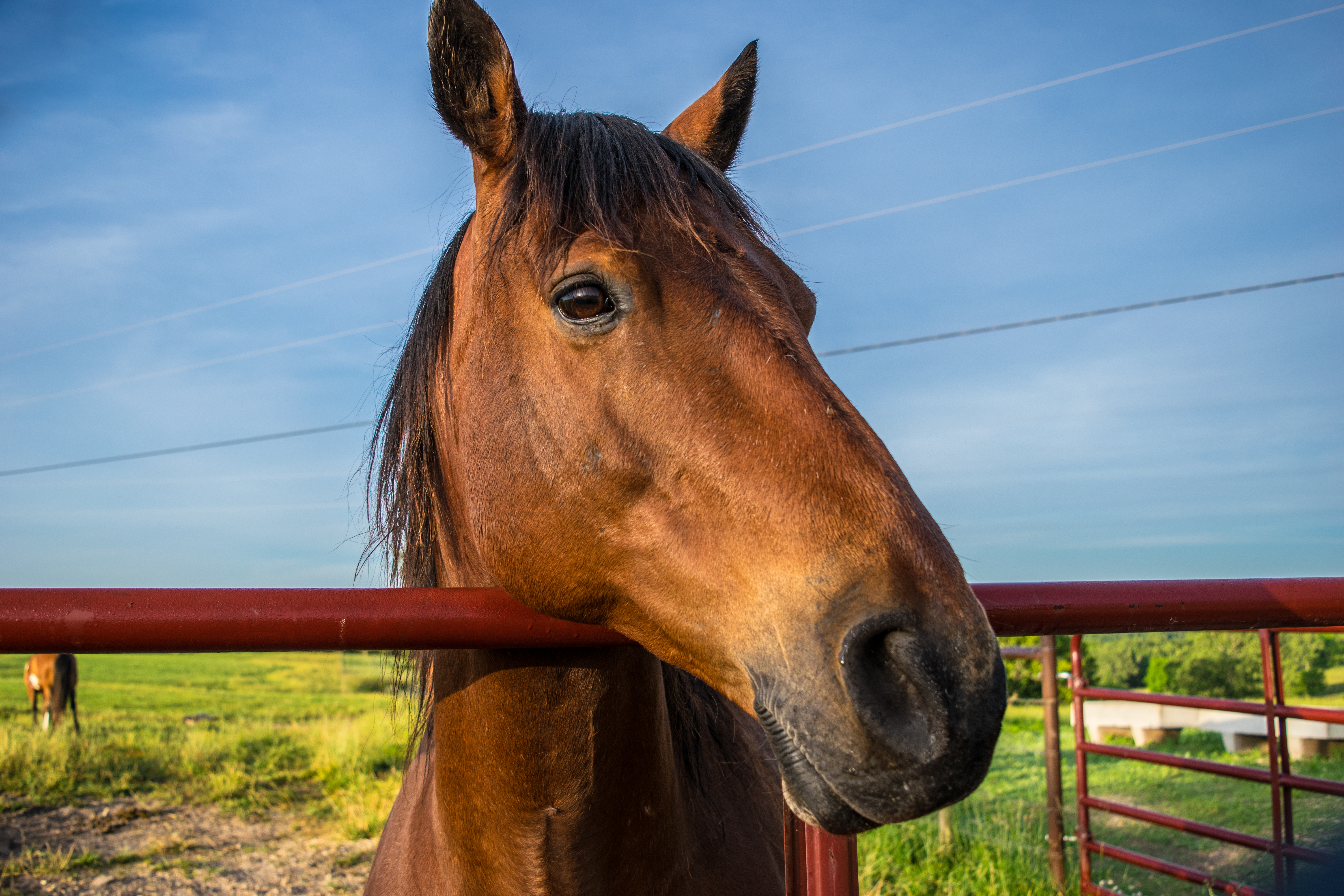 horse on the missouri ranch