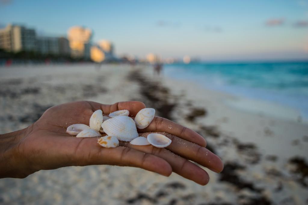 Playa Marlin Seashell Shoot
