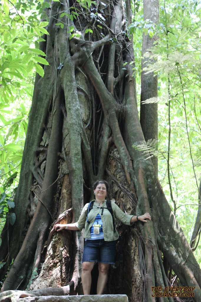 Amelia and massive tree