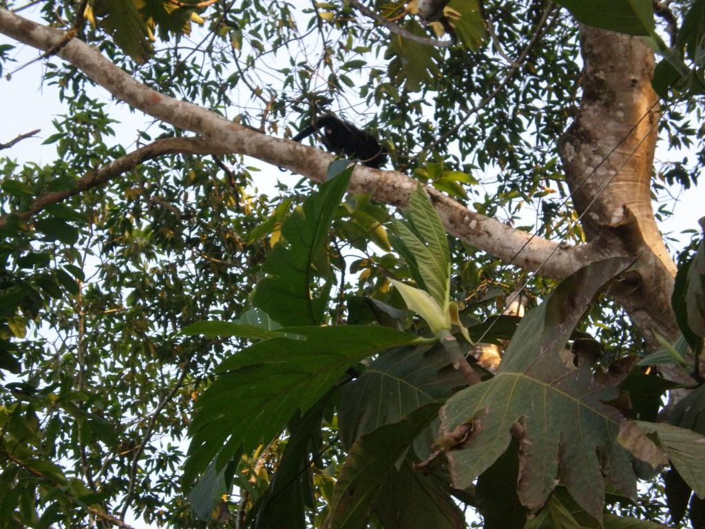 Monkey at El Panchan