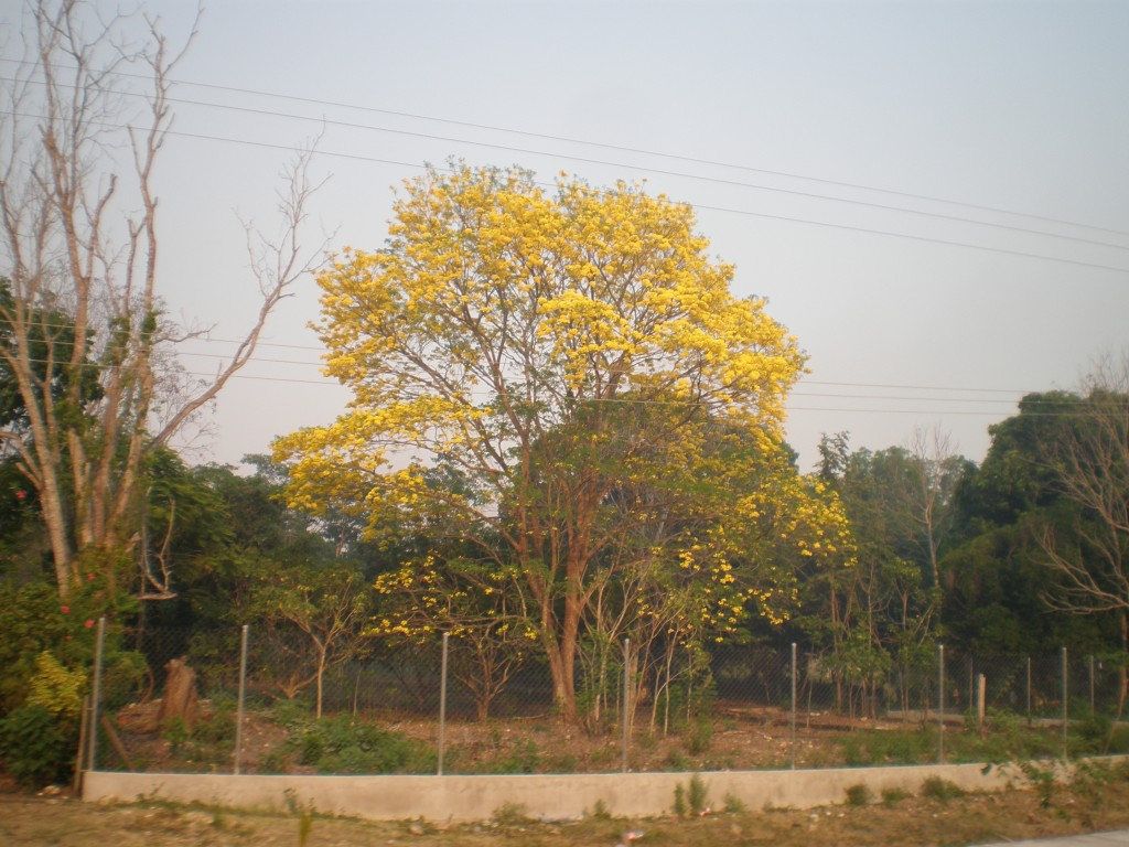 Trees in Tabasco