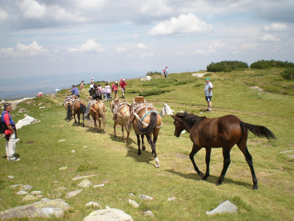 Seven Rila Lakes Horses